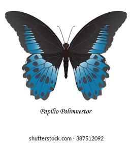 Indian Swallowtail Butterfly Papilio Polymnestor - Illustration. Element for design. ClipArt.