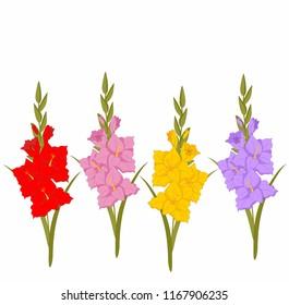 individual bright gladiolus flowers. The symbol of autumn