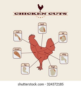 info graphic of the chicken cuts on light background