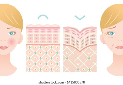 info graphic skin layer illustration of young skin and old skin with woman face. beauty and skin care concept