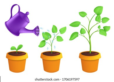 Infographic different stages of young plants growing up with the watering can. Vector botanical illustration of green sprout with leaves in pot isolated on white background