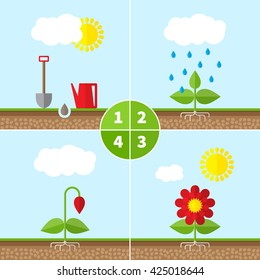 Infographic four stages of plant growth. Growing concept. Vector infographic