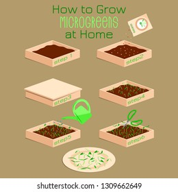 Infographic how to grow microgreens at home. Six steps to grow microgreen in a box with soil. Packaging Design seeds, microgreens , sprouters