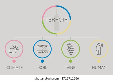 Infographic of meaning terroir word. Sommelier education. Climate, soil, vine, human icons. Vector illustration in flat style.