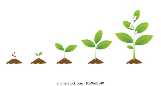 Infographic of planting tree. Seedling gardening plant. Seeds sprout in ground. Sprout, plant, tree growing agriculture icons. Vector realistic illustration with flowers isolated on white background.