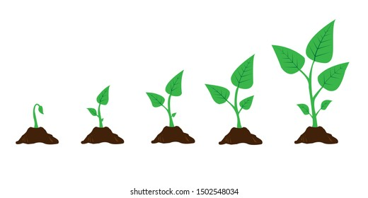 Infographic of planting tree. Seedling gardening plant. Seeds sprout in ground. Sprout, plant, tree growing agriculture icons. Vector illustration isolated on white background.