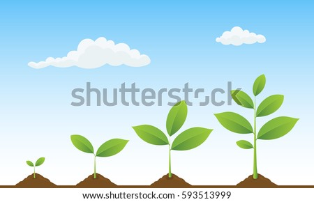 Infographic of planting tree. Seedling gardening plant. Seeds sprout in ground. Sprouts, trees growing icons. Seedling agriculture. Plants growing on beautiful landscape. Vector illustration.