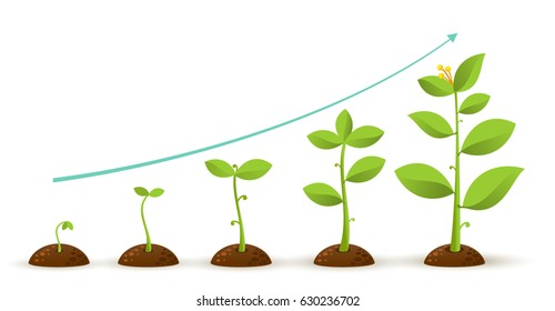 Infographic of planting tree. Seeds sprout in ground. Seedling gardening plant. Sprouts, plants, trees growing icons. Vector illustration. Isolated on white background.
