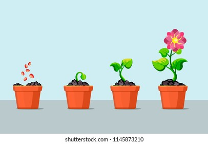 Infographic of planting tree steps in pot. Seedling sprout in ground gardening plant. Vector illustration flowerpot with flower