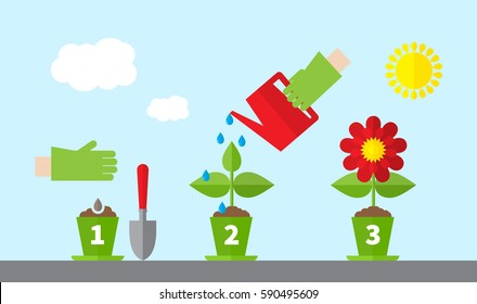 Infographic stages of plant growth. Growing concept. Flat design, vector illustration.