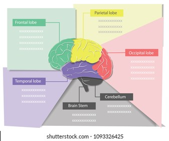 infographic for study of brain and Dementia