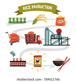 Infographic template of rice production from cultivation to finished product cultivation, drying, harvesting, transportation to factory, milling, packaging, ready product.