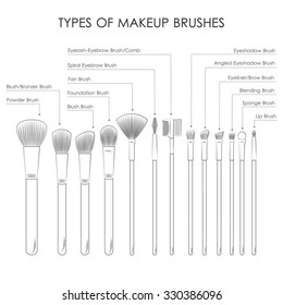 infographic. Types of  make-up brushes. Sketch
