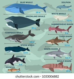 Infographics of giant inhabitants of the sea depths