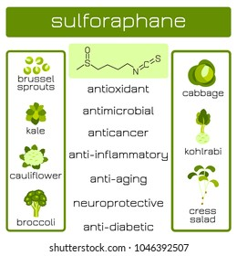Infographics. Sulforaphane organic compound of plant origin with anti-cancer and antibacterial and others effects. Products in which it is contained