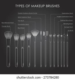 Infographics. Types of  make-up brushes