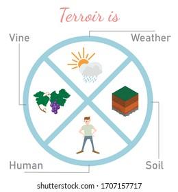 Inforgraphic of terroir. Illustration for sommelier education. Vector illustration on isolated background
