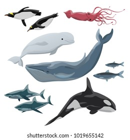 Inhabitants of cold seas and oceans. Blue whale, beluga, killer whale, penguins, giant squid, sharks and Arctic fish. Wild animals. Vector illustration isolated on white background.