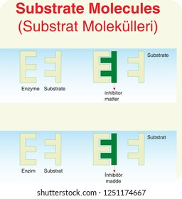 Inhibitors substrates - substrate molecules