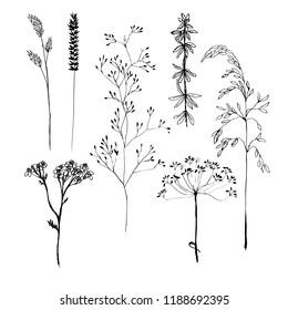 ink autumn herb