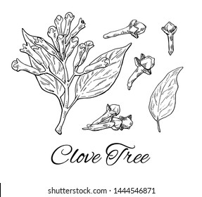 Ink Clove Tree hand drawn set. Retro botanical line art. Medical herb and spice. Vintage raw Cloves branch with flowers, leaves and buds. Herbal vector illustration isolated on white background