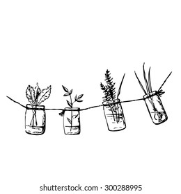 Ink drawing with greenery. Hand drawn fast sketch with crisp lettuce, basil, hyssop and onion in hanging mason jars with water. Idea for Summer kitchen doodle style. Vector file is EPS8.