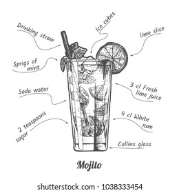ink drawing illustration of cocktail mojito and its ingredients in vintage hand drawn style. isolated on white.