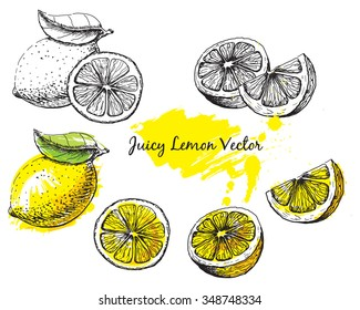 Ink drawing of a lemon in black and white and colour, each image is separate, easy to edit