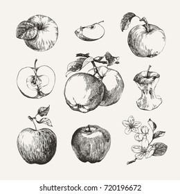Ink drawn collection of apples