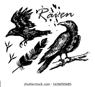 Ink drawn raven. A raven sitting on a branch, a raven flying sketch. Footprints, feather.