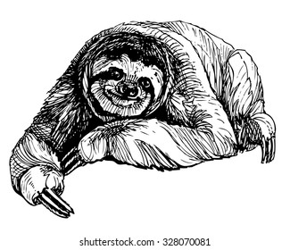 Ink drawn sitting three-toed sloth. Exotic south american animal isolated on white background. Vector picture