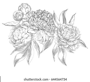 Ink hand drawn illustrations of ornate peonies. Flower buds, leaves and stems, beautiful card design, Vector