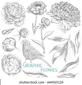 Ink hand drawn illustrations of ornate peonies. Flower buds, leaves and stems and bird, beautiful card design, Vector