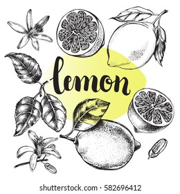 Ink hand drawn lemon set with brush calligraphy style lettering. Citrus fruit elements collection for design labels, packaging, cards. Vector illustration.