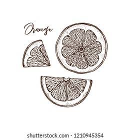 Ink hand drawn orange isolated on white background. Vector illustration of highly detailed citrus fruits. Sliced lemon drawing.