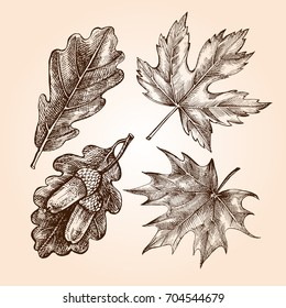 Ink hand drawn set of maple and oak leaves. Botanical elements collection for design, Vector illustration.