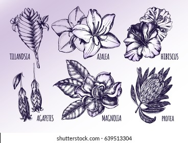Ink hand drawn set of tropical and exotic flowers - Protea, Tillandsia, Azalea, Hibiscus, Magnolia, Agapetes. Botanical elements collection for design, Vector illustration.