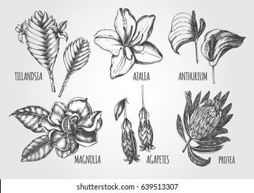 Ink hand drawn set of tropical and exotic flowers - Protea, Tillandsia, Azalea, Anthurium, Magnolia, Agapetes. Botanical elements collection for design, Vector illustration.