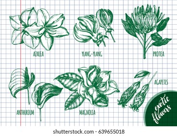 Ink hand drawn set of tropical and exotic flowers - Protea, Azalea, Anthurium, Magnolia, Agapetes, Ylang-Ylang. Botanical elements collection for design, Vector illustration.