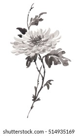 Ink illustration of flower, blooming chrysanthemum in monochrome. Sumi-e, u-sin, gohua painting style. Silhouette made up of black brush strokes isolated on white background.