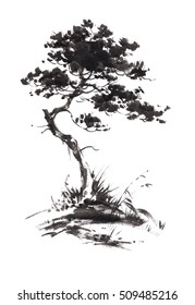 Ink illustration of growing pine tree with some grass. Sumi-e, u-sin, gohua painting style. Silhouette made up of black brush strokes isolated on white background.