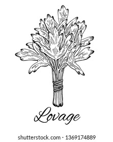 Ink Lovage bunch hand drawn sketch. Retro botanical art. Medical herb and spice. Vintage raw lovage. Stylish monochrome black and white sketch. Herbal vector illustration isolated on white background