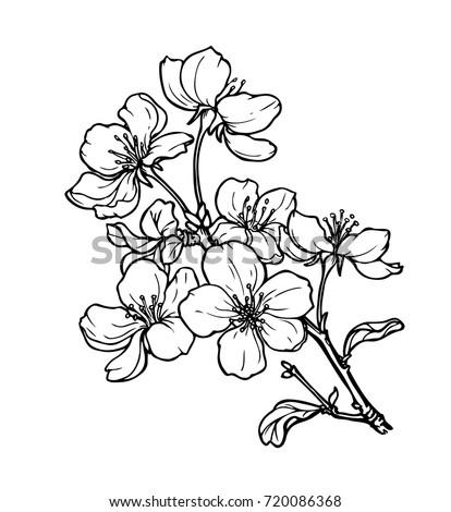 Ink pencil black white flower sketch transparent stock vector ink pencil black and white flower sketchansparent background hand drawn nature mightylinksfo