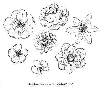 Ink, pencil flower sketch.Transparent background. Hand drawn nature painting. Freehand sketching illustration.