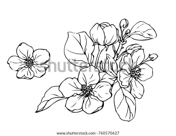Чернила, карандаш, листья и цветы яблоко изолированы. Линия искусства прозрачный фон. Ручная рисованная природа живопись. Свободная рука эскиз иллюстрации.