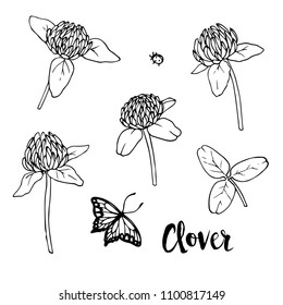 Ink, pencil,  the leaves and flowers of clover isolate. Line art transparent background. Hand drawn nature painting. Freehand sketching illustration.