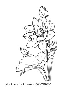 Ink, pencil,  the leaves and flowers of Lotus isolate. Line art transparent background. Hand drawn nature painting. Freehand sketching illustration.