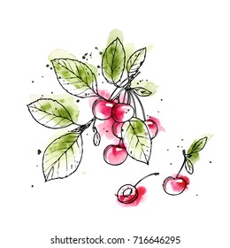 Ink, pencil, watercolor  the fruits ,the leaves and branches of cherry isolate. Line art transparent background. Hand drawn nature painting. Freehand sketching illustration.