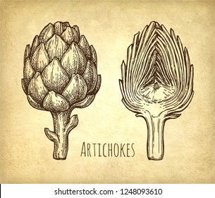 Ink sketch of artichokes. Hand drawn vector illustration on old paper background. Retro style.