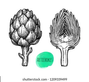 Ink sketch of artichokes. Isolated on white background. Hand drawn vector illustration. Retro style.